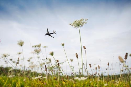 plane field1